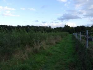Die doppelt belegte Kompensationsfläche an der Ettersheide. Rechts der Zaun des Lindener Friedhofes