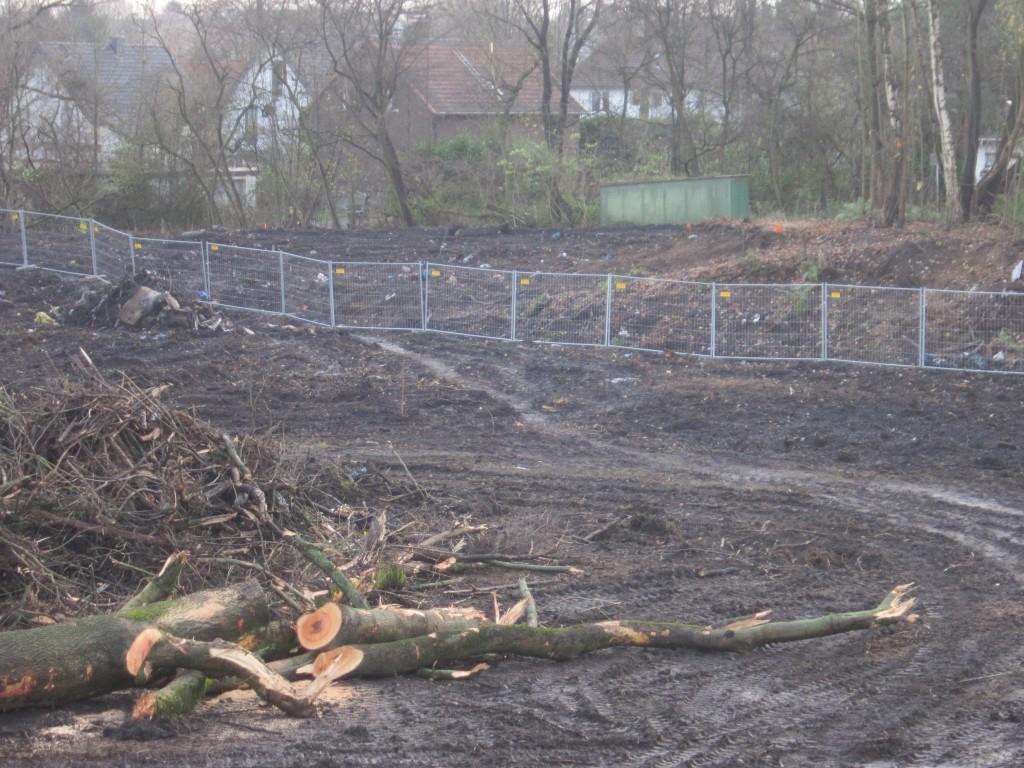 Der Südwald wurde sogar außerhalb des B-Plan Gebietes gerodet. War das mit der Unteren Forstbehörde abgesprochen? Vermutlich nicht!